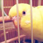 私が鳥さんを好きになった話