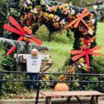 北九州市の名所!動物にも過ごしやすい到津の森公園